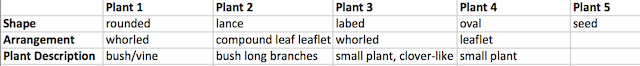 Image:Lab 4 Plant Sample Observations.png