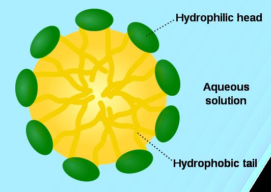 File:Micelle phospholipids.png