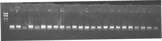 File:PKU Switch 07-8-27 PCR 3.jpg