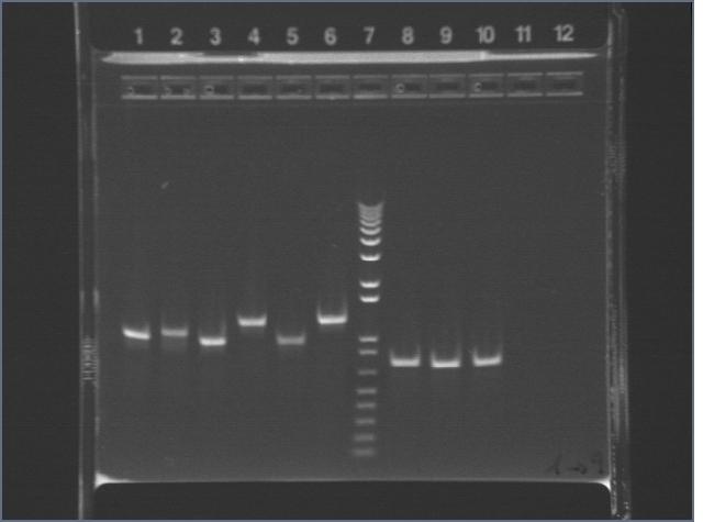 File:3-30 PCR1-9AV.jpg