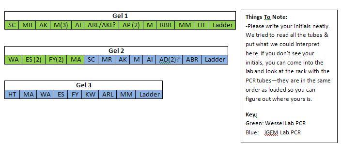 Biol 1220Gel Key Image.JPG