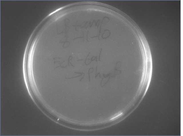 File:EcR-Gal-PhyB lig 8-12.jpg
