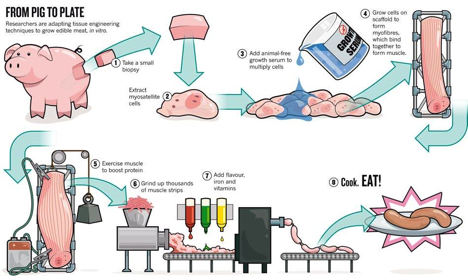 A concise chart that summarizes the methodology of in vitro meat production