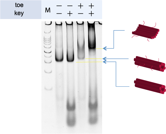 File:Figure 1 1.png