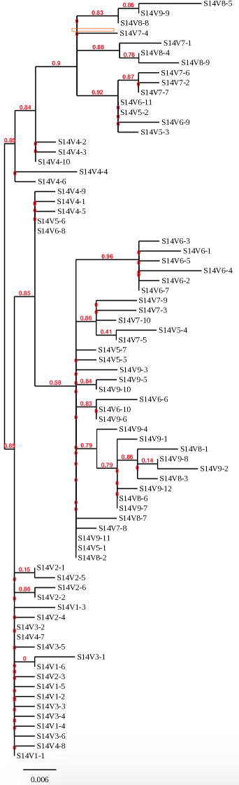 Phylogenetic tree for Subject 14