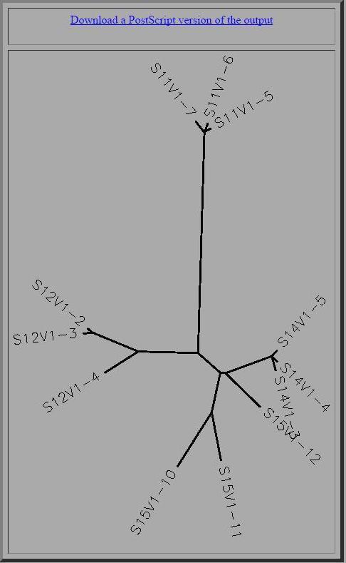 Shiv tree.jpg