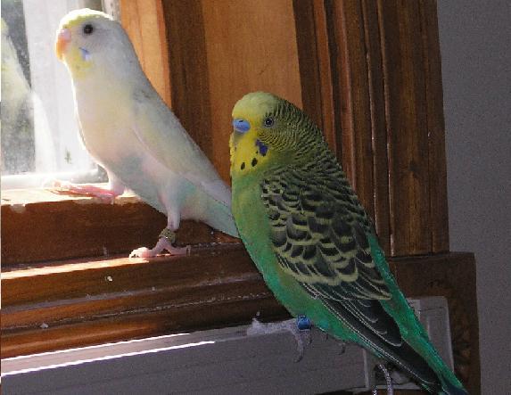 File:Birds