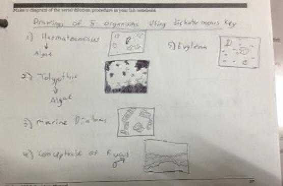 Dichotomous key 1.jpg