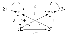 File:Phage-biosys.jpg