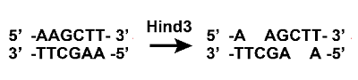 File:Hind3 reactionKashiwa.png