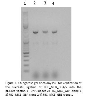 Ligation FliC MCS GB4-5 into pET30b.png
