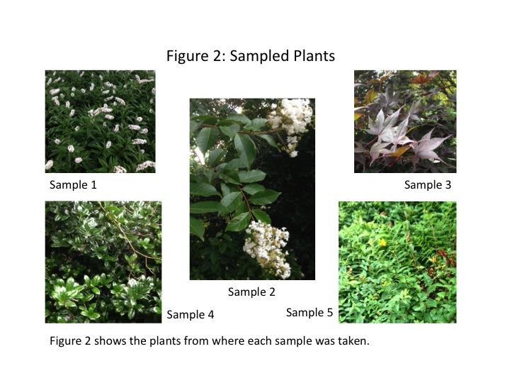 File:Dagum Transect 3 Plant Samples 3.jpg