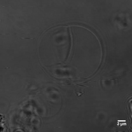 File:BM12 nanosaurs Control to the huggingsSBtrans.jpg