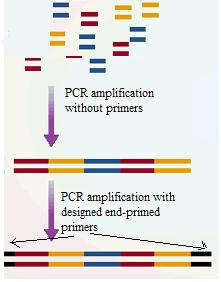 PCR mediated DNA shuffling