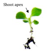 File:Shoot apex.png