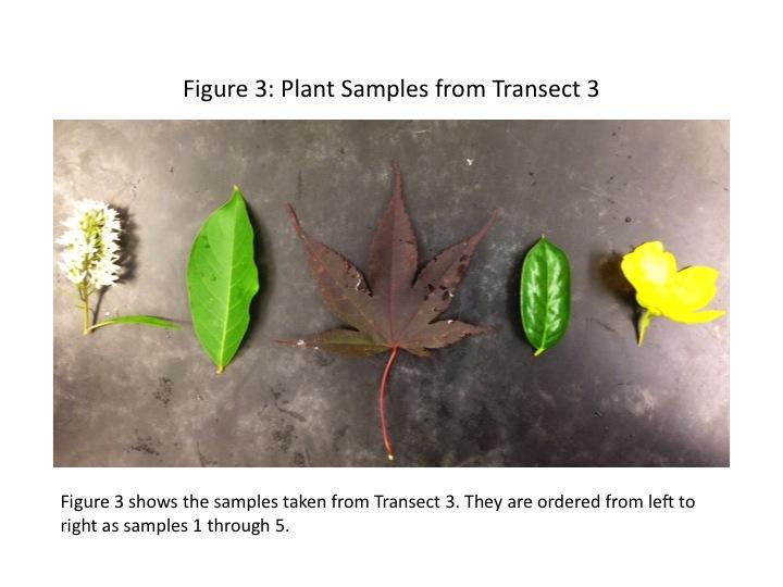 File:Dagum Transect 3 Plant Samples 4.jpg
