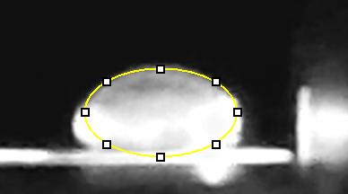 File:5 calf thymus.jpg