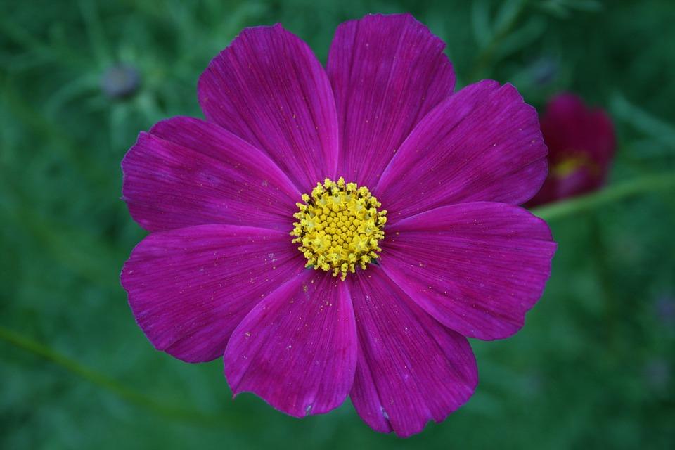 File:Flower.jpg