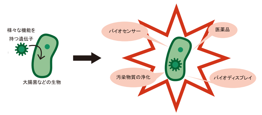 Igem kyoto view.png