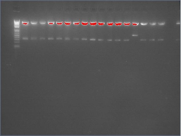 File:2-assembly-diagnost-L.jpg