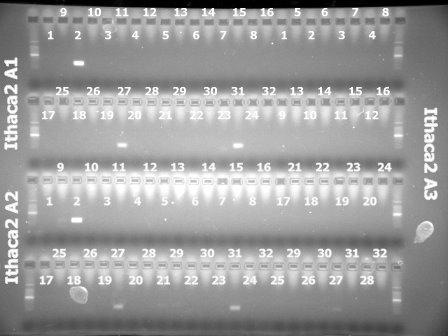 3Mar'10 Ithaca2(A1,A2,A3).jpg