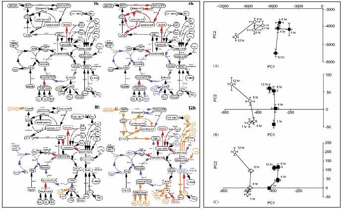 File:Nagrath Evolution of intrahepatic carbon fig.jpg