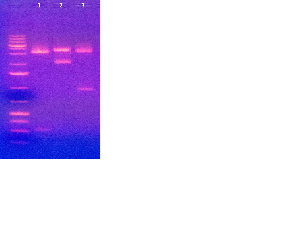 Plate pic DNA 3-8-2012.jpg