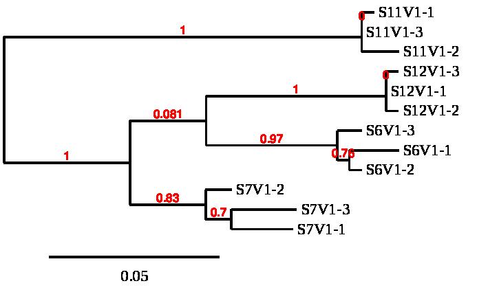 Markham SMultiV1C1-3.png