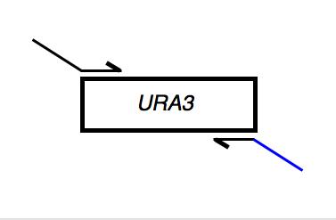 File:Macintosh HD-Users-nkuldell-Desktop-URA3rev tail.png