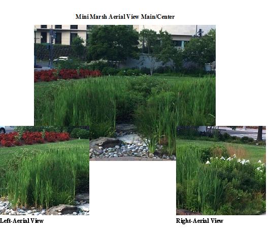 File:Mini marsh.png