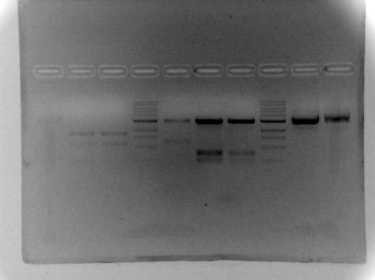 File:S13 M2D5 WF gel-Platinum.jpg