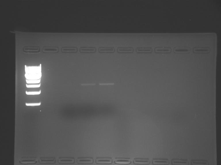 File:S14-M1D4 WF-Grn.jpg