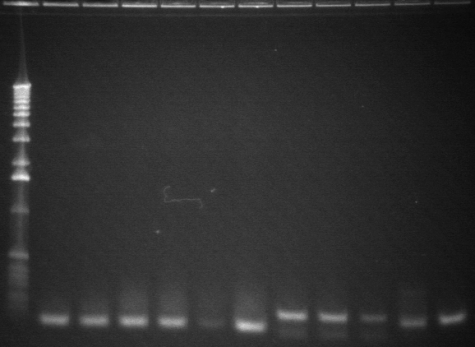 8-6 pcr fourth 11 from back.jpg