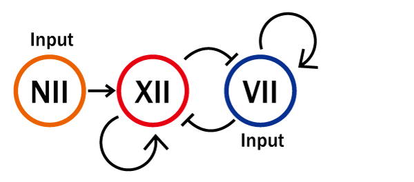 The concept of the experiment VII