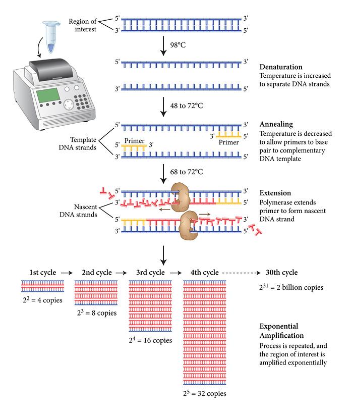 PCRBonus.jpg