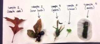 5 plant samples .jpg