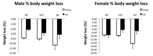 File:Body weight loss %.jpg