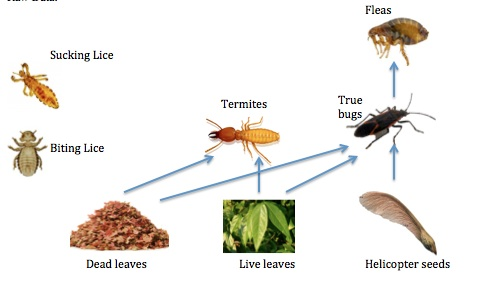 Food Web of Organisms in Transect.jpg