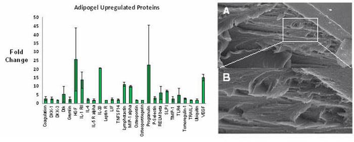 Nagrath Fig Adipocytes.jpg