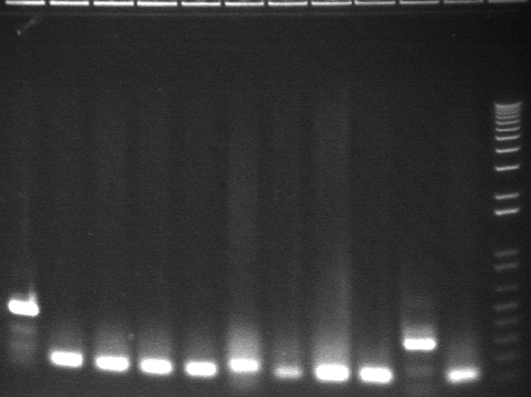 8-6 pcr second 11 from back.jpg