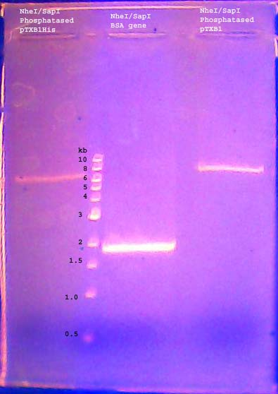 Image:DNA gel 110629 annotated.jpg