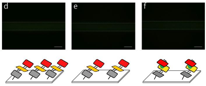 File:Biomod-2012-UTokyo-UT-Hongo Fixing on microfluidics (image-2) ver4.jpg