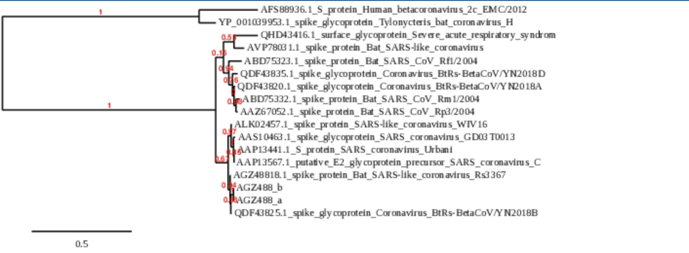 Phylogenetic Tree Taghizadeh.png