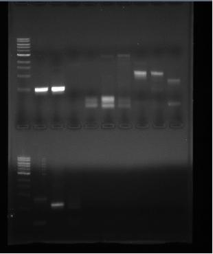 UIUC Sequencing.jpg