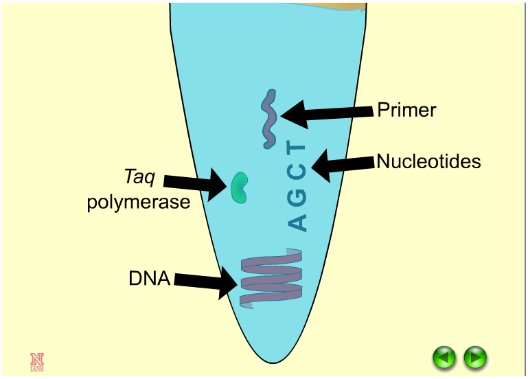 an overview of the polymearse chain reaction in the genetic science