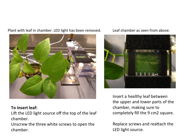 Qubit Photosynthesis Slide 5.jpg