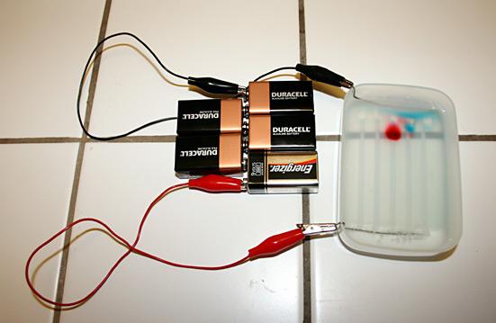 File:DIY Gel Electrophoresis.png