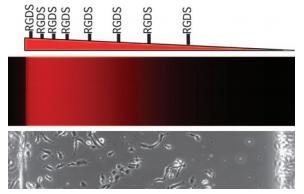 File:MicrofluidicsPicture4.png
