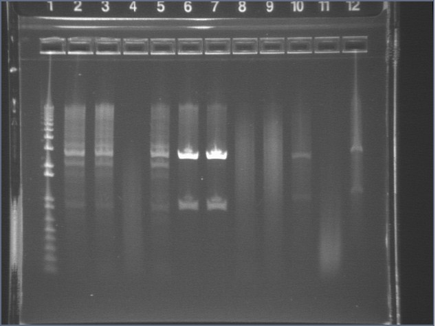 7-23 analyticdig B ls.jpg