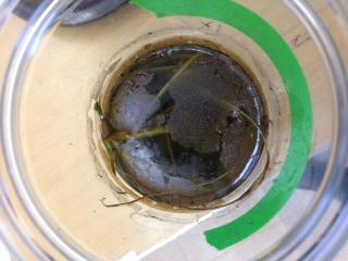 Jar aerial.png